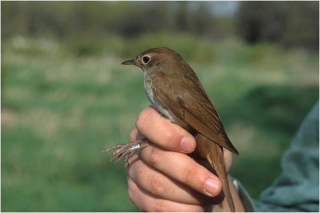 Özgür Keşaplı Didrickson, Sol'da ODTÜ'nün Kuş Bilimi Açısından Önemini Yazdı