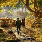"""""""Ahlat Ağacı"""" ya da Nuri Bilge Ceylan'ın En Zayıf Halkası – Onur Keşaplı"""