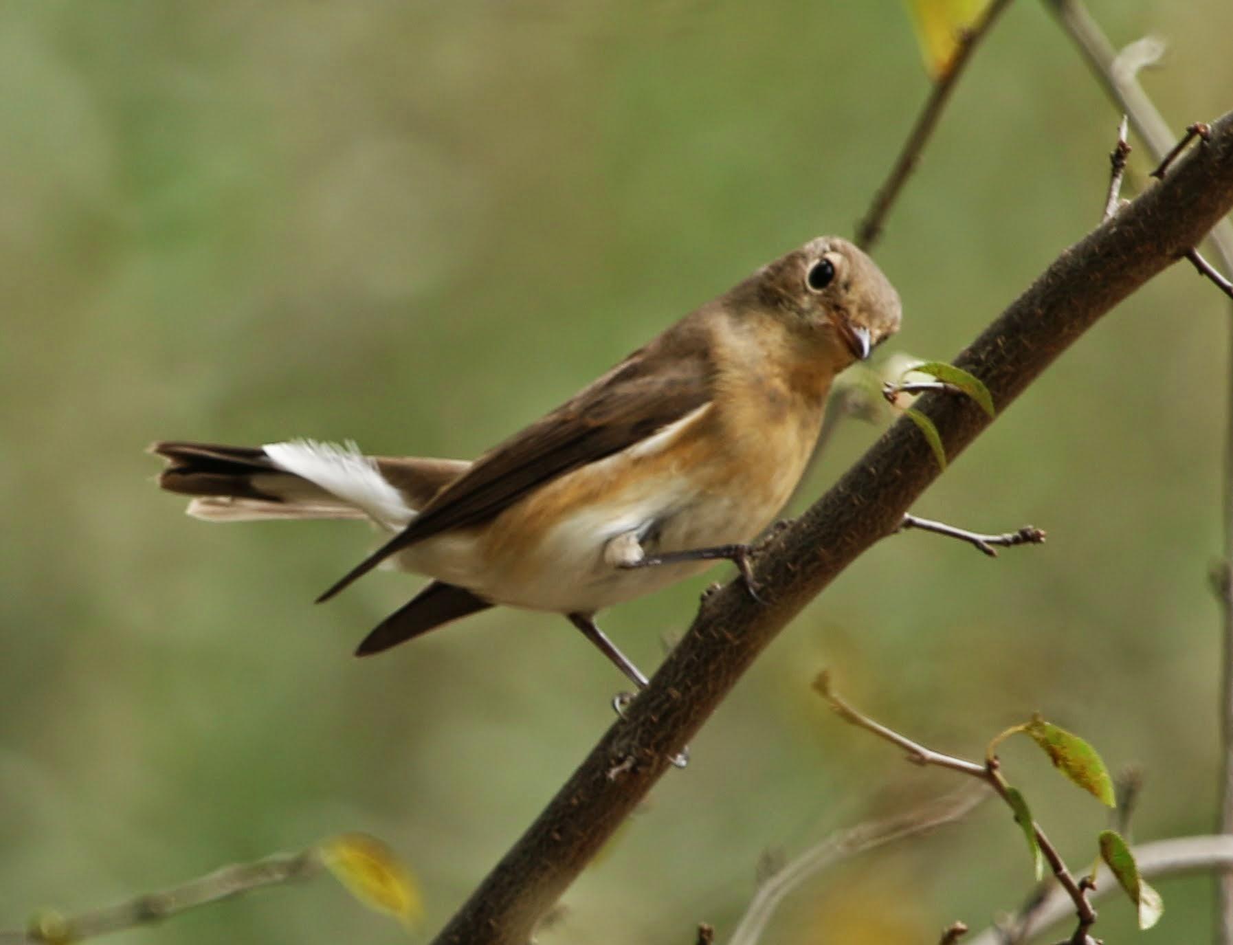Büyüleyici Bir Kuş: Gökkuşağı Lori