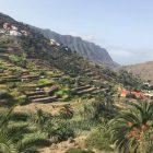 """Dirimbilim Günlüğü: Karınca Aslanı, La Gomera (Kanarya Adaları), Kaz Dağı, """"love in a puff"""""""