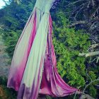 The Magenta Gown - Rebecca O'Deaghaidh